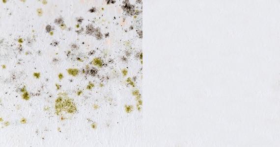 カビ / 除菌