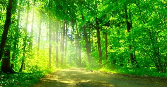 森林 / きれいな空気
